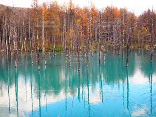 青い池の写真・画像素材[2269393]