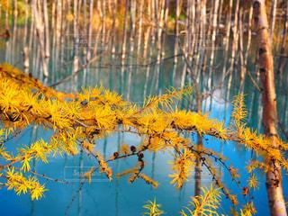 黄と青のせかいの写真・画像素材[2269394]