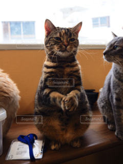 おねだりする猫の写真・画像素材[2269398]