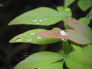 緑の植物のクローズアップの写真・画像素材[2269412]