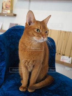 看板猫の写真・画像素材[2269423]