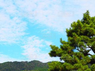 松と空の写真・画像素材[2269426]