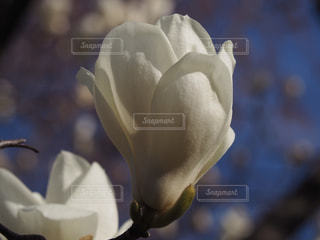 花のクローズアップの写真・画像素材[2269454]