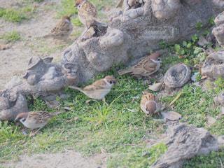 木の上に座っている鳥の写真・画像素材[2269457]