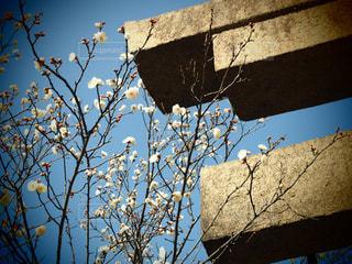 木のクローズアップの写真・画像素材[2269460]