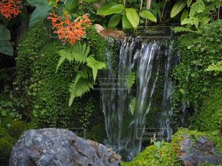 庭の小さな滝の写真・画像素材[2269466]
