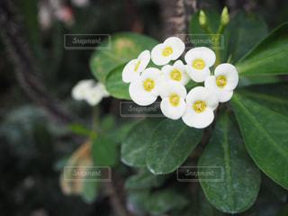 花園のクローズアップの写真・画像素材[2269468]