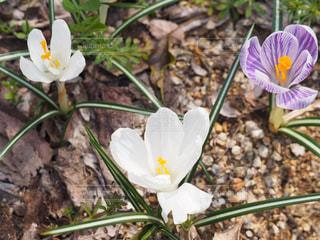 花のクローズアップの写真・画像素材[2269472]