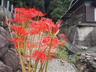 花園のクローズアップの写真・画像素材[2269478]