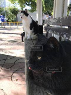ベンチでくつろぐ猫達の写真・画像素材[2269479]