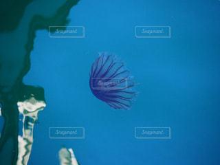 水の下を泳ぐクラゲの写真・画像素材[2269480]