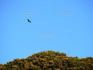 空を飛ぶ鳥の写真・画像素材[2269481]