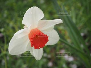 花のクローズアップの写真・画像素材[2269482]