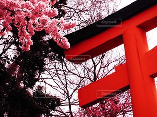 桜の写真・画像素材[2269484]