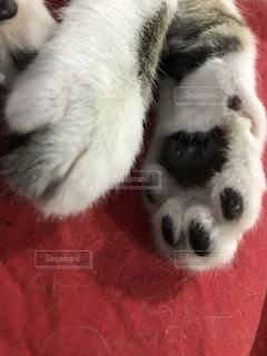 横たわる猫の写真・画像素材[2269497]
