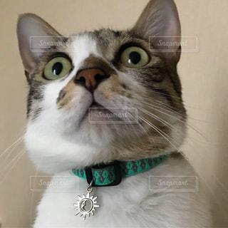 緑色の目をした猫のクローズアップの写真・画像素材[2274722]