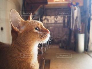 猫のクローズアップの写真・画像素材[2311421]