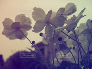 花の写真・画像素材[2320122]