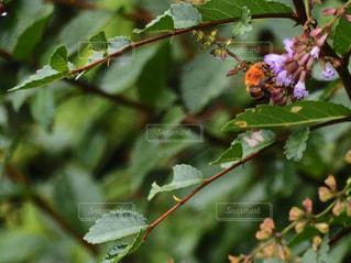 蜂の写真・画像素材[2391598]
