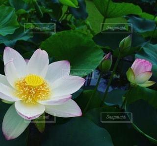 花のクローズアップの写真・画像素材[3330722]