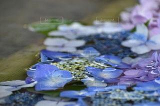 池のクローズアップの写真・画像素材[3330724]
