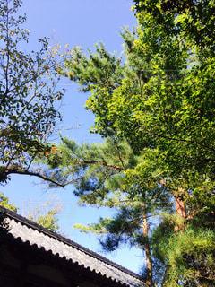 瓦と木と空の写真・画像素材[2208793]