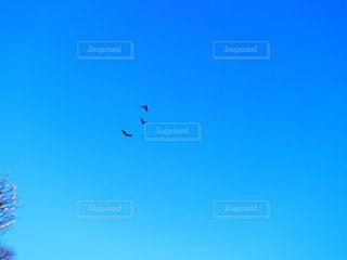 桜と鳥の写真・画像素材[2206593]