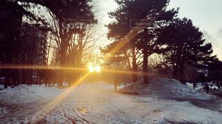 夕日と雪の写真・画像素材[2201004]