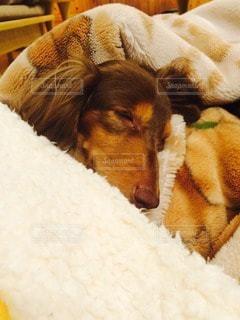 犬の写真・画像素材[85500]