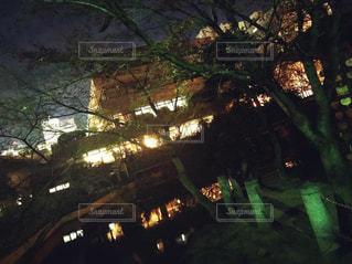 木のクローズアップの写真・画像素材[2213036]