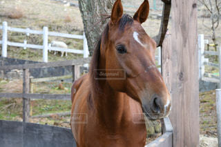塀の横に立っている茶色の馬の写真・画像素材[2193706]