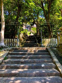 神様に続く階段の写真・画像素材[2407996]