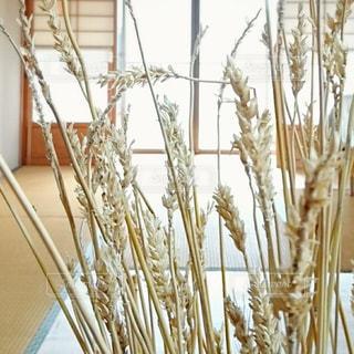 小麦の写真・画像素材[2260135]