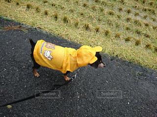 雨の日のお散歩の写真・画像素材[2260178]