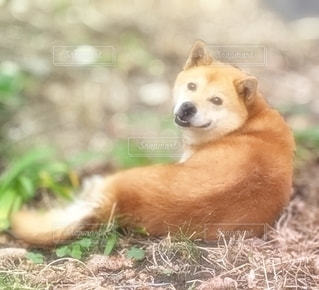 犬の写真・画像素材[2641730]