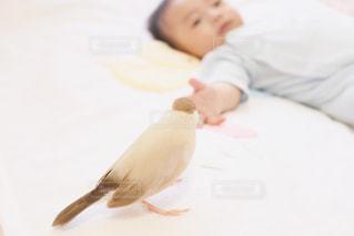 赤ちゃんとペット②の写真・画像素材[3209191]
