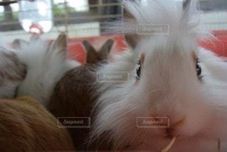 動物の写真・画像素材[85821]