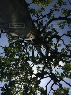 自然の写真・画像素材[86097]