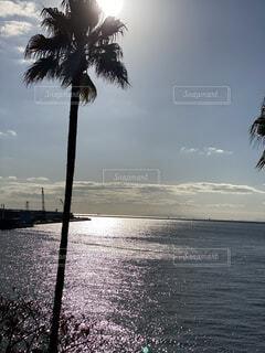 眩しい太陽の写真・画像素材[3910737]