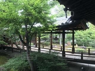 建仁寺の庭の写真・画像素材[2197593]