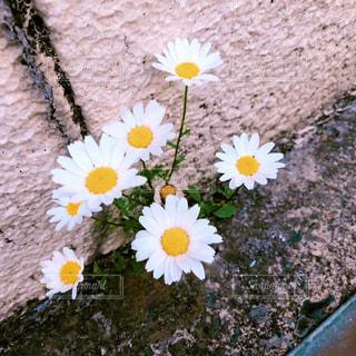 道端の花の写真・画像素材[2194804]