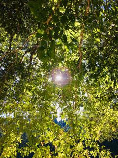 木漏れ日の写真・画像素材[2508775]