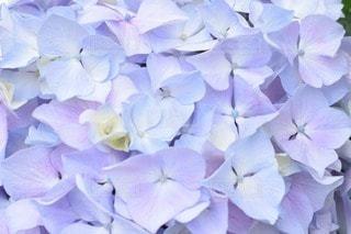 No.134672 お花畑
