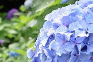 No.134673 お花畑
