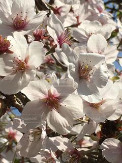 花のクローズアップの写真・画像素材[2195331]