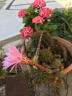 植物の上のピンクの花の写真・画像素材[2196138]