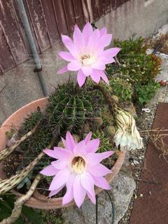 植物の上のピンクの花の写真・画像素材[2196154]