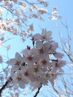 花のクローズアップの写真・画像素材[2196811]