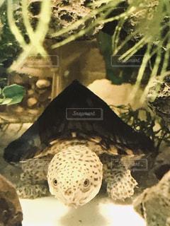 亀のクローズアップの写真・画像素材[2192508]