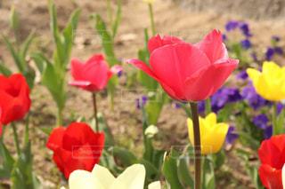 赤い花の写真・画像素材[2204198]